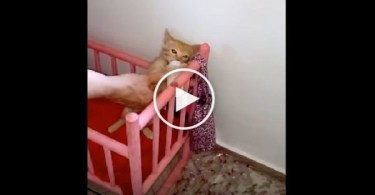 Little Kitten Runs To Her Bed, Patiently Waiting For Her Mom To Warm Up The Milk