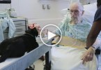 Therapy Cat Cheers Up Patients In The Intensive Care Unit