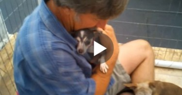 Abused Puppy Feels Love For The First Time After This Man Sat Down In Her Cage