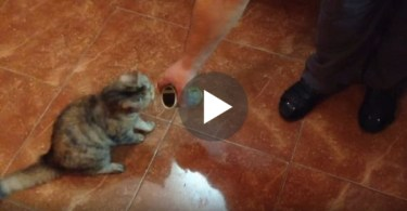 Cat Smells Olive For The Very First Time. Her Reaction Is HILARIOUS !