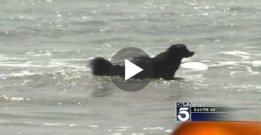 dog rescued swimmers