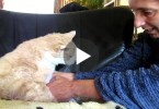 how to clean elderly cat