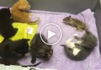 Mom Cat Adopts And Nurses Baby Squirrel . Amazing Cat !