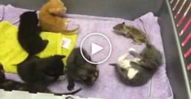 Mom Cat Adopts And Nurses Baby Squirrel . Amazing Cat !