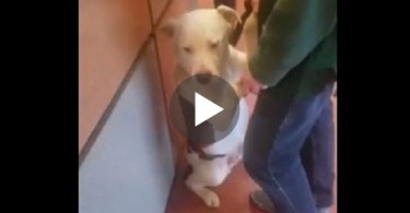This Dog Realized He Is Getting Surrendered And Doesn`t Want To Leave His Owner....