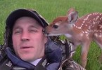 Rescued Baby Deer Didn`t Want To Leave Her Rescuer . This Will Warm Your Heart !