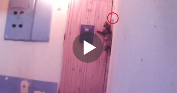 Owner Set Up A Hidden Camera And Caught His Cat Doing This Amazing