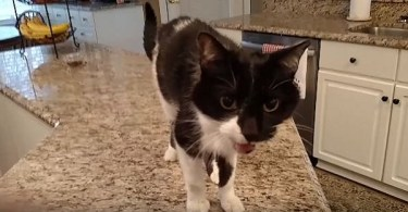 This Kitty Has The Deepest Meow Ever! I Couldn`t Believed My Ears!