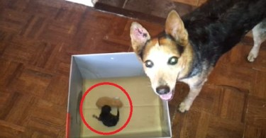 Dog Found Two Orphaned Newborn Kittens And Adopted Them. This Is Precious!