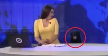 dog interrupts news broadcast