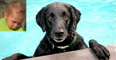 Dog Jumps Into Pool To Save a Drowning Baby. This Dog Is A Real Hero !