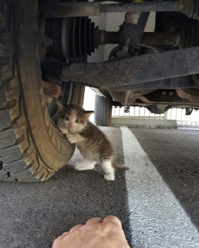 This Guy Gave Incredible Thing to Stray Kitten Clinging to Truck