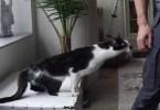 neediest kitty