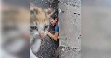 Woman Heard Desperate Meowing Coming From Storm Drain. She Immediately Climbed Down And Rescued This Little Kitten...