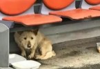 Homeless Stray Dog Afraid of Humans Had The Rescue of a Lifetime