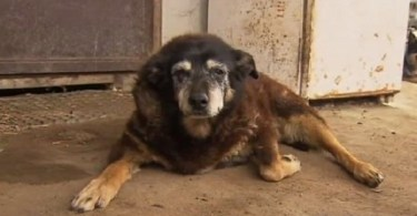 Maggie, the World`s Oldest Dog Passed Away At The Age Of 30