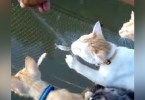Cats Are Perfect Company When You Go Fishing