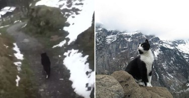 Hero Cat Guided a Lost Man Down A Mountain To Safety!