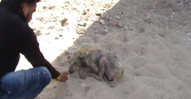 Poor Dog Was Lying On The Ground And Couldn`t Even Stand Up. Amazing Transformation!