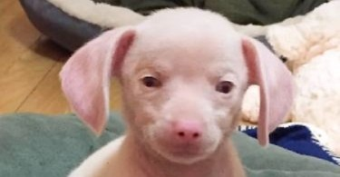 This Tiny Pink Puppy Is Blind And Deaf Because Of Her Ex Owner