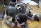 Cat Mommy Calls Her Cute Kittens For Lunch Time