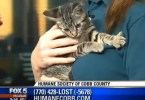 Energetic Kitten Has Hilarious Embarrassing Moment On Live Broadcasting Show