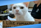 Kitty Was Living 436 Days In Shelter Until Staff Come Up With A Brilliant Idea
