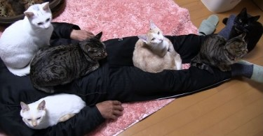 The Cats Are All Over Him And Won`t Leave Him Alone!