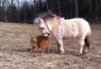 Cat And Mini Horse Living Together Are Best Friends