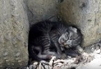 Homeless Poor Kitten Lying On The Roadside, Finally Get Warm Bed And Home