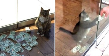 Nobody Knows How this Kitty Was Bringing Money To Their Office And Then They Caught Him On Hidden Camera