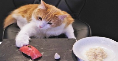 This Guy Makes Sushi For His Gorgeous Cats