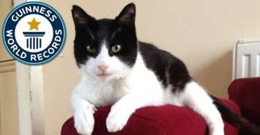 This Kitty Broke The Guinness World Record For The Loudest Purring Cat