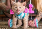 This Woman Is Caring For A Cute Paralyzed Kitten