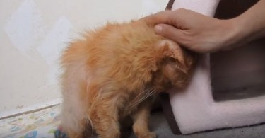 Abandoned And Mistreated 17-Year-Old Cat Learns To Love Again
