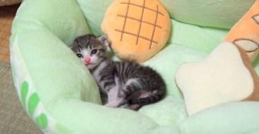 Meet Ohagi - The Cutest Kitten Exploring His New Forever Home