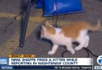 Stray Kitten Interrupts Live TV News, Asking For Some Food