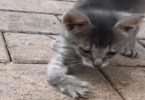 Stray Kitten With Curved Legs Walks Up To Woman Begging For Help
