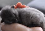 Color Changing Cat Looked Grey As Baby, But Now It Looks Completely Different