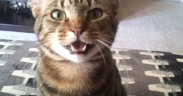 Cat Drops His Favorite Toy, Complains To Owner About That