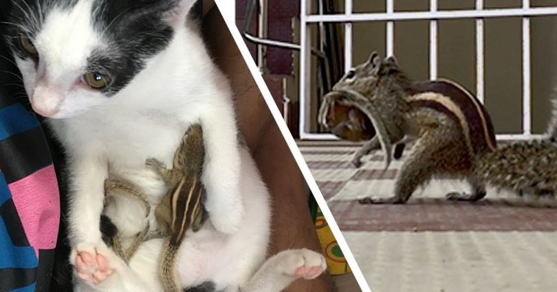 Cat Hugs And Cares For Baby Squirrels Rescued From Cyclone And Few Days Later Their Mom Shows Up