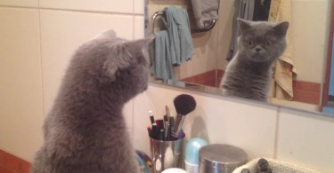 Cute Kitty Admires Himself In The Mirror