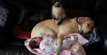 Kitten, Puppy And Baby Cuddling Together