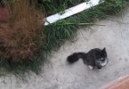 Kitty Begins Meowing In Front Of Man`s Window Asking For Some Help