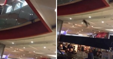 Man Uses a Box Filled With Pillows To Rescue And Catch A Cat Falling From The First Floor In The Mall