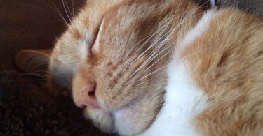 Snoring Sleepy Kitten Will Definitely Bring Smile On Your Face