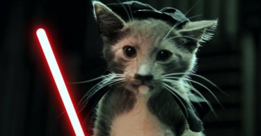 The Force Is Strong With These Cute Jedi Kittens! +23 Million Views!