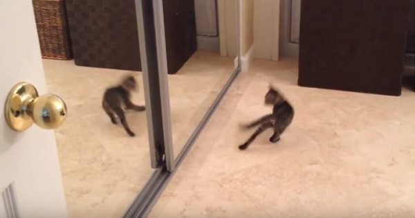 Tiny Kitten Confused By His Own Mirror Reflection And Even Tries To Fight It
