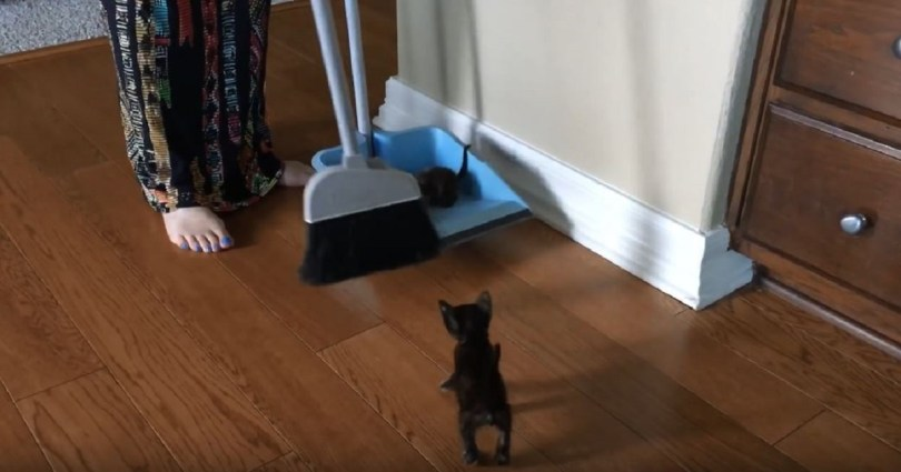 """She Had To Clean Her Home, Because It Was """"Infested With Kitten""""… Too Cute For Words"""