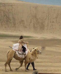 フタコブラクダに乗る。月の砂漠のようだ